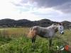 3 Pantelleria Sicilia trekking piedi in cammino fie federazione italiana escursionismo foto michele colombini